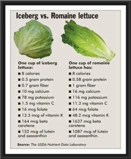 iceberg vs romaine